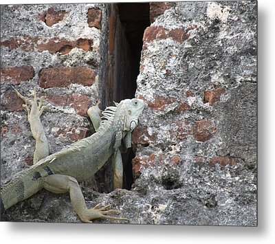 Metal Print featuring the photograph Iguana by David S Reynolds