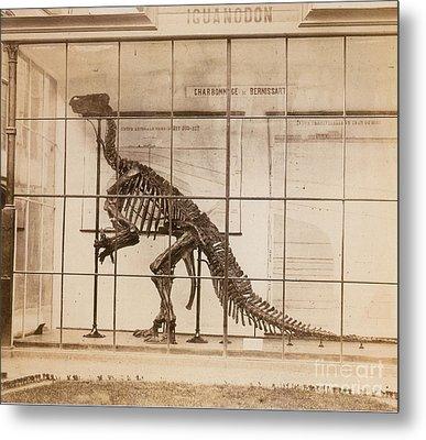 Iguanodon Skeleton Mesozoic Dinosaur Metal Print by Science Source