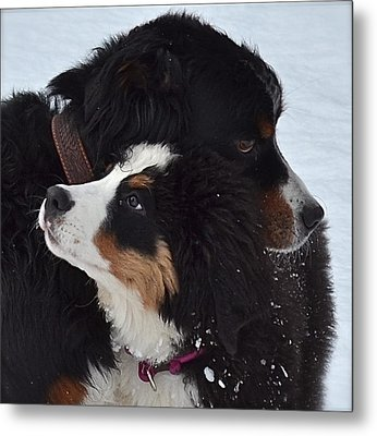 I'll Keep You Warm Metal Print by Barbara Dudley