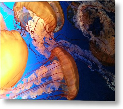 Metal Print featuring the photograph I'll Take Jelly With That by Caryl J Bohn