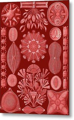 Illustration Shows Algae. Diatomea. - Schachtellinge Metal Print by Artokoloro
