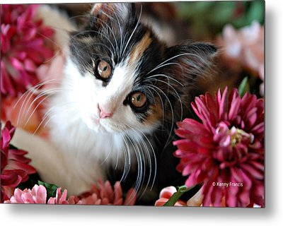 I'm Just So Adorable Metal Print by Kenny Francis