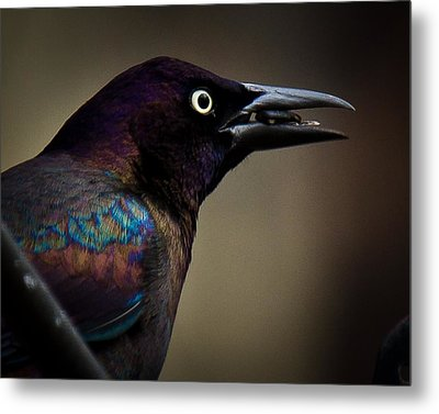 Metal Print featuring the photograph I'm Not Done Eating by Robert L Jackson