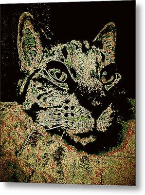I'm Sorry To Wake You Cat Metal Print by Bob Gruber