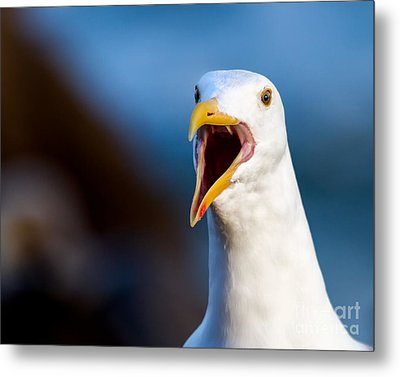 Metal Print featuring the photograph I'm Talking To You by Dale Nelson