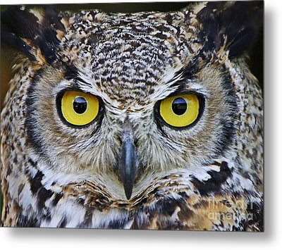 Metal Print featuring the photograph I'm Watching You by Heather King
