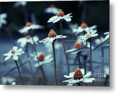 Imagine F03a Metal Print by Variance Collections