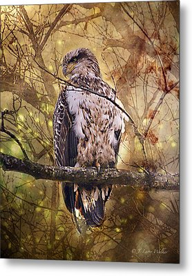 Metal Print featuring the digital art Immature Bald Eagle In Solitude by J Larry Walker