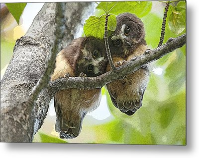 Impossibly Cute Owl Fledglings- Abstract Metal Print by Tim Grams