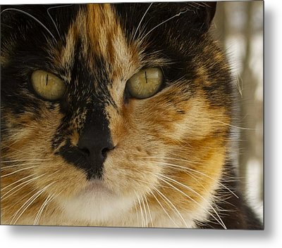 Calico Metal Print by Julie Smith