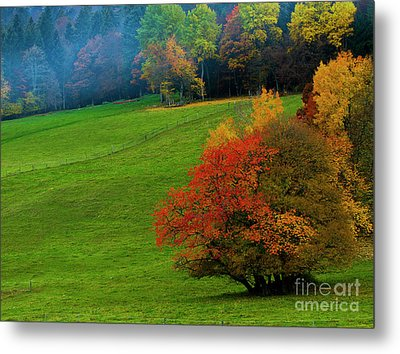 Metal Print featuring the photograph In A Field Of Green by Charles Lupica