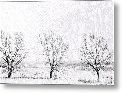 In A Line. Winter Trees Metal Print by Jenny Rainbow