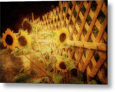 Sunflowers And Lattice Metal Print by Toni Hopper