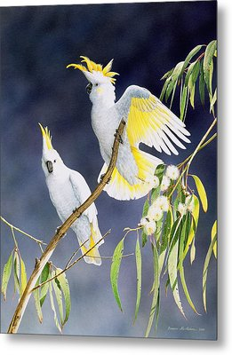 In A Shaft Of Sunlight - Sulphur-crested Cockatoos Metal Print