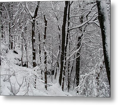 In A Winter Wonderland Metal Print by Bill Cannon
