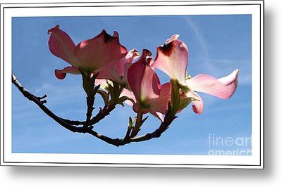 In All Its Glory Metal Print by Sara  Raber