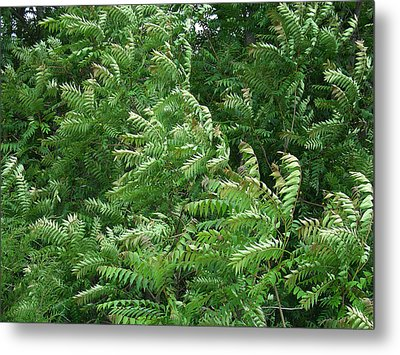 In An Instant Of A Summer's Breeze The Forest Dances And Sways Metal Print by Terrance DePietro