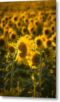 In Bloom Metal Print by Scott Bean