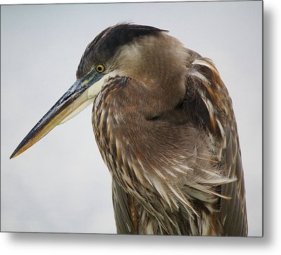 In Deep Thought - # 13 Metal Print by Paulette Thomas