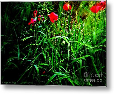 Metal Print featuring the photograph In Flanders Fields by Mariana Costa Weldon
