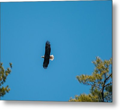 Metal Print featuring the photograph In Flight by Brenda Jacobs