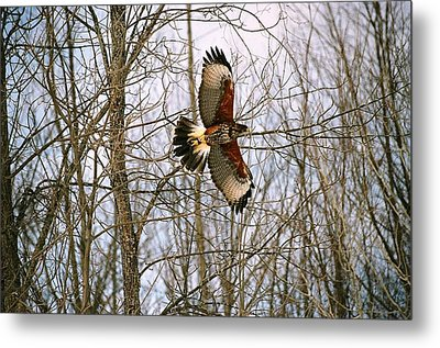 Metal Print featuring the photograph In Flight by David Porteus