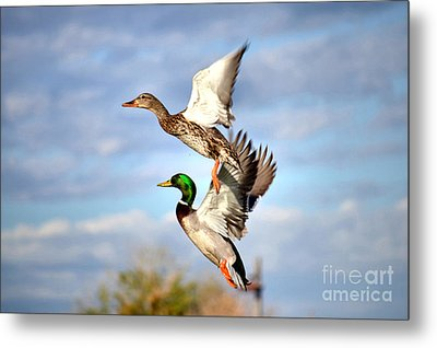 In-flight Metal Print by Deb Halloran