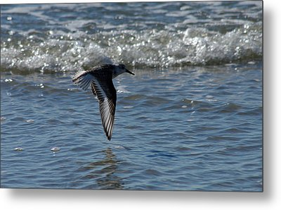 Metal Print featuring the photograph In Flight by Greg Graham