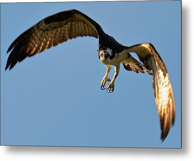 In Flight Metal Print by Julie Cameron