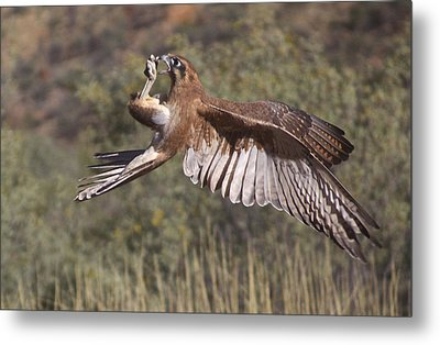 In Flight Meals Metal Print by Venetia Featherstone-Witty