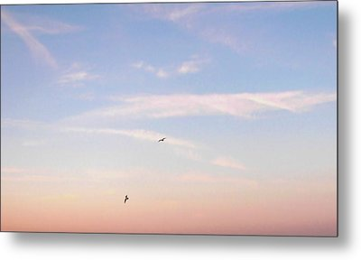 Metal Print featuring the photograph In Flight Over Rehoboth Bay by Pamela Hyde Wilson
