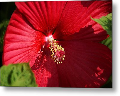 In Full Bloom Metal Print by Thomas Fouch