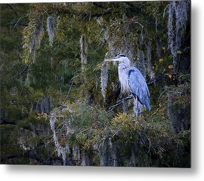 In His Element  Metal Print by JC Findley