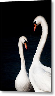Metal Print featuring the photograph In Love by Laura Melis