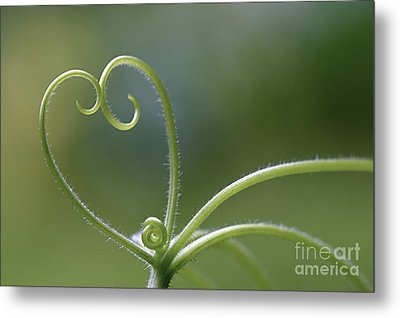 In Love With Nature Metal Print by Maria Ismanah Schulze-Vorberg