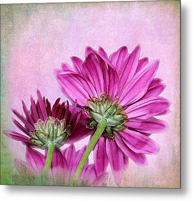 In Reverse Metal Print by Judy Vincent