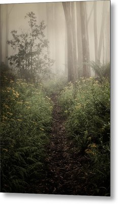 In Silence Metal Print by Amy Weiss