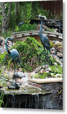 In The Back Yard Metal Print by Steven Parker