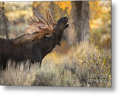 In The Breeze Metal Print by Aaron Whittemore