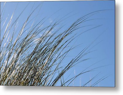 In The Breeze - Soft Grasses By Sharon Cummings Metal Print