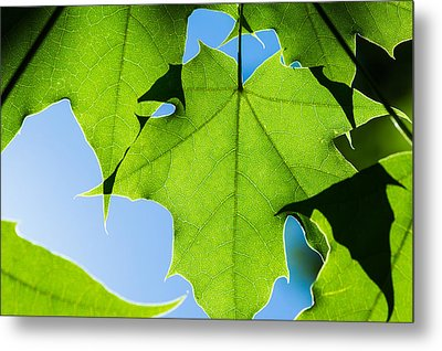 In The Cooling Shade - Featured 3 Metal Print by Alexander Senin