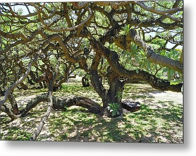 In The Depth Of Enchanting Forest I Metal Print by Jenny Rainbow