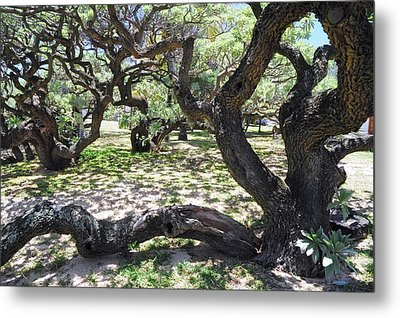 In The Depth Of Enchanting Forest V Metal Print by Jenny Rainbow