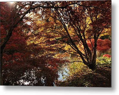 The Direction Of Dreams Metal Print by Connie Handscomb