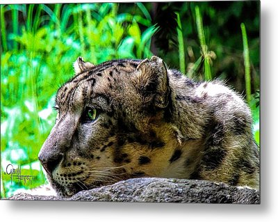 Metal Print featuring the photograph In The Eye Of A Leopard by Glenn Feron