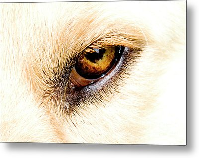 Metal Print featuring the photograph In The Eyes.... by Rod Wiens