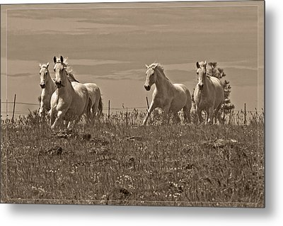 In The Field Metal Print by Wes and Dotty Weber