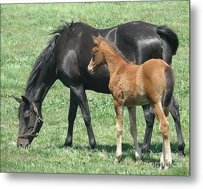 Metal Print featuring the photograph In The Field by Debby Pueschel