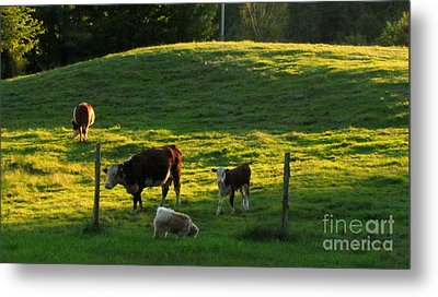 In The Field Metal Print by Randi Shenkman
