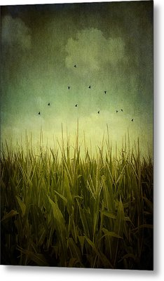 In The Field Metal Print